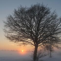 Boom in sneeuw bij ondergaande zon