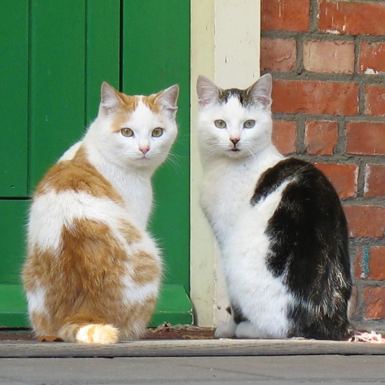 Wij bewaken de deur! - 2 van mijn katten, zitten ongeveer altijd samen voor de deur. Was foto's van ze aan het maken, en opeens keken ze me samen