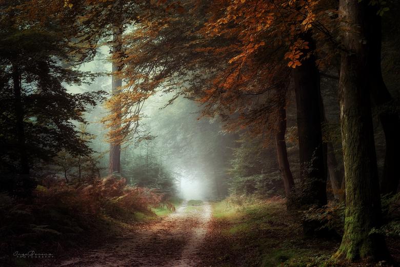 Dark Autumn Days. - Goedemorgen lieve mensen! Een donkere en regenachtige herfstochtend vraagt om een donker en mistig herfstplaatje. Genomen tijdens