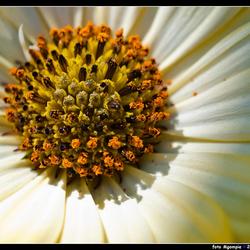 Tijd voor een bloemetje