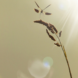 dancing in the sunlight