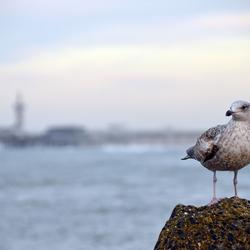 Meeuw in de haven van Scheveningen