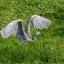 Blauwe reiger vliegt weg