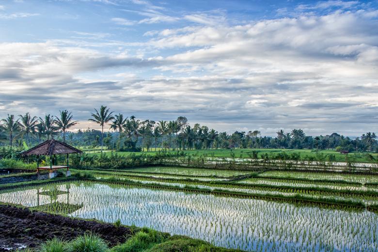 A morning at Tetebatu, Lombok (Indonesia) - Tijdens de laatste dagen op Lombok verbleven wij voor ons vertrek naar Gili Meno in Tetebatu. Dit dorpje l
