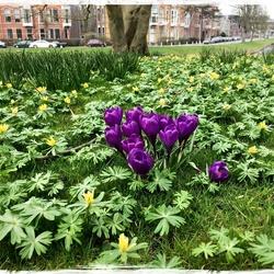 Spring time ...