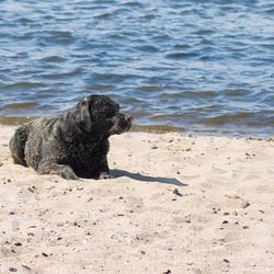 Navy seal?