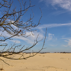 Hollandse woestijn