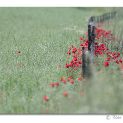 Poppies playground