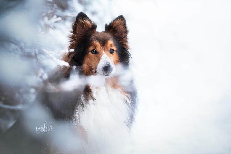 Mickey in de winter - Mickey in de sneeuw
