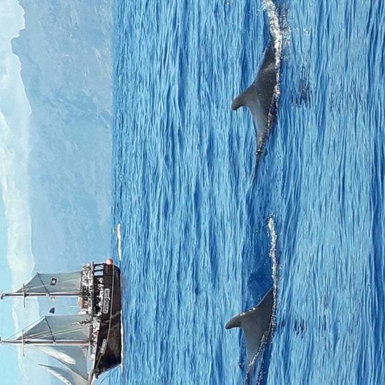 Kleine walvissen  - 2 grienden in de zee