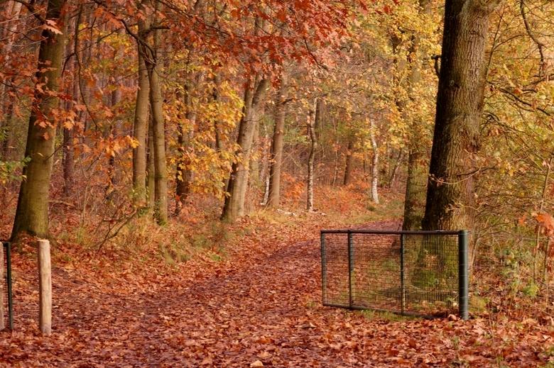 entering autumn -