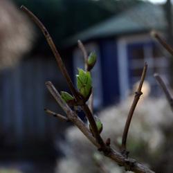 Uitluikende lente