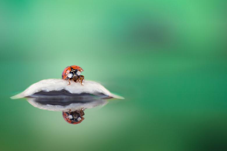 lieveheersbeestje... -