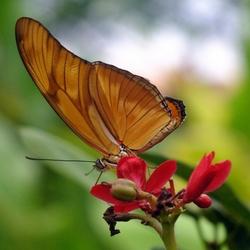 Amazonica diergaarde Blijdorp