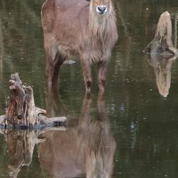 aangepaste foto burgers zoo