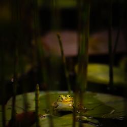 Diep in het waterwoud