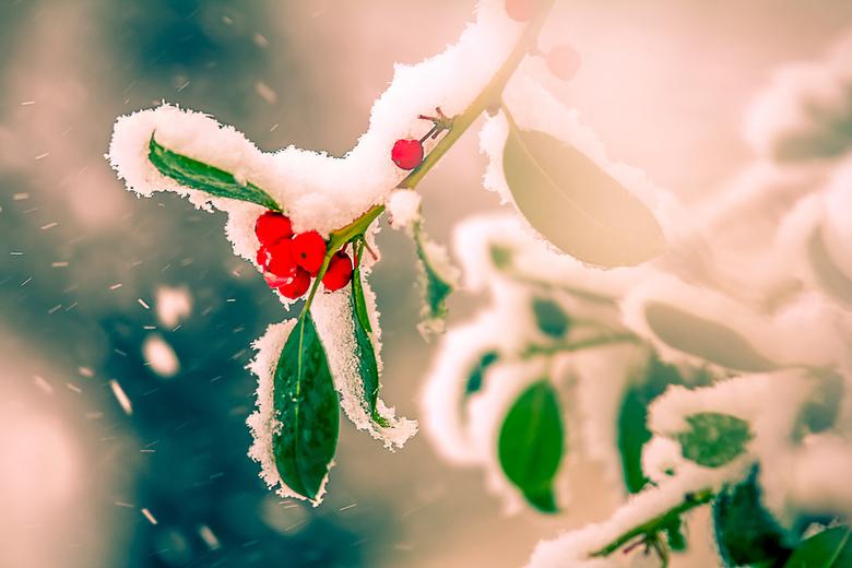 let it snow - in de sneeuwstorm