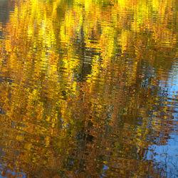 Herfst-spiegeling in water