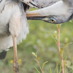 Heron(ymous)2