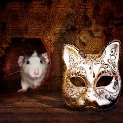 . . . Cat and Rat . . .