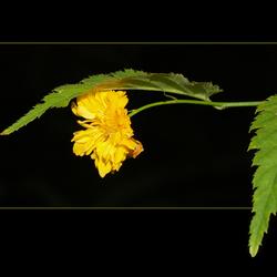 Geel bloemetje.