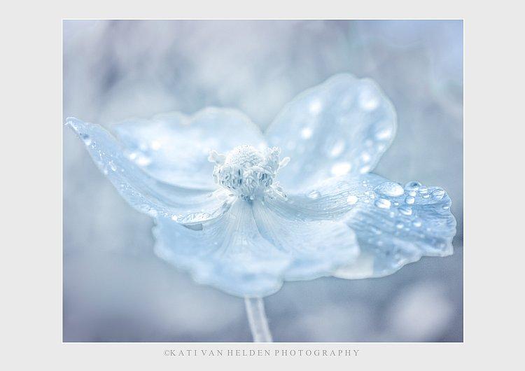 Ice Queen -