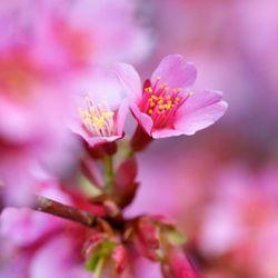 Geuren en kleuren