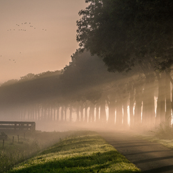 Mistige herfstmorgen