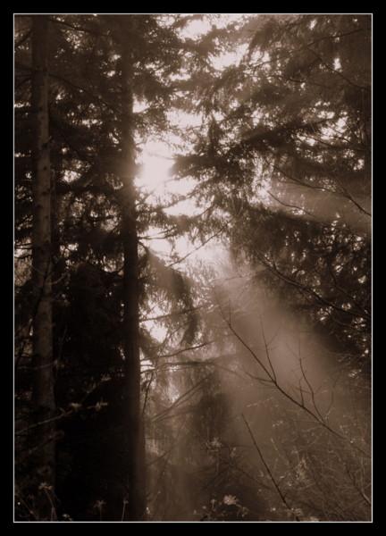 En toen was er licht... - Gisteren heb ik een beginnersworkshop natuur- en landschapsfotografie gevolgd van fotograaf Bas Meelker. Super leuke en leer