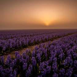 Delft Blue in de mist