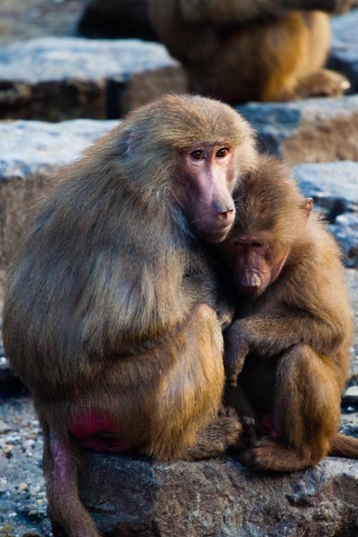Monkey Business - Dagje Noorderdierenpark Emmen