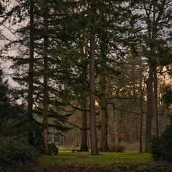 Twente lights in the wood