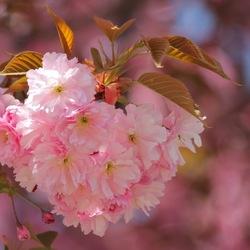 Begin van de lente