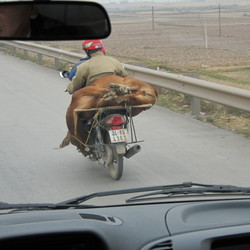 Veevervoer Viëtnam 2012