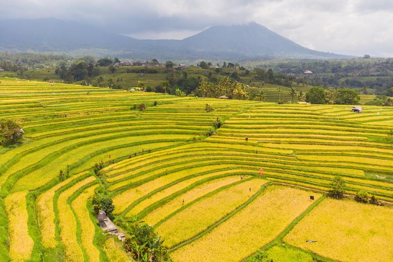 Jatiluwih rijstvelden - Bali - UNESCO erfgoed - Jatiluwih rijstvelden op Bali, Indonesië. Prachtig uitzicht op de rijstvelden.