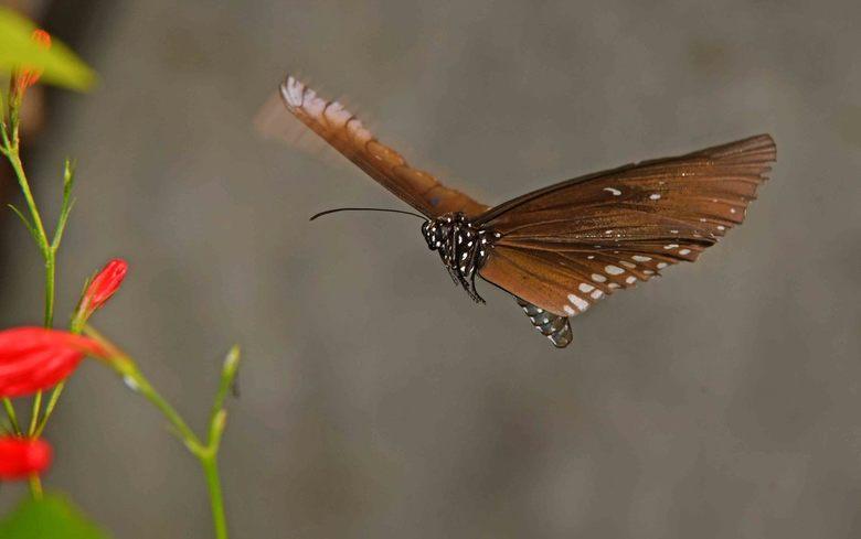 """alliteratie - Bij het taal-stijlfiguur """"alliteratie"""" beginnen twee of meer woorden met dezelfde beginletter, bijvoorbeeld vliegende vlinder."""