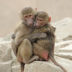 Even een knuffel