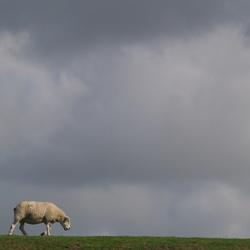 Dijk en schaap