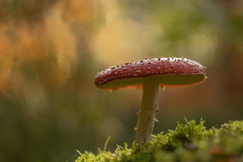 Eentje van de..... - zeer velen. ze schieten letterlijk als paddenstoelen de grond uit.  Maar je moet wel wat geluk hebben met achtergrond etc.  Met d