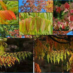 herfst in alle kleurschakeringen............