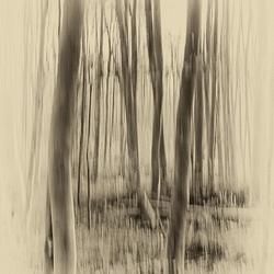 Zie door de bomen .............
