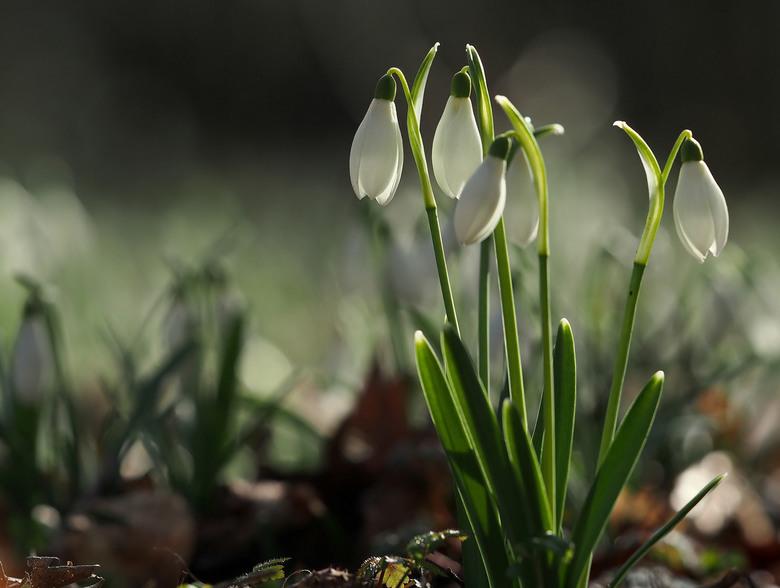 In het Bos,... - En Tegenlicht..de kleine witte...<br /> <br /> Iedereen bedankt voor de reacties op...<br /> Een klein Beetje,...<br /> <br /> F