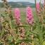 Schotland Bloemen