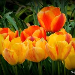 Oranje Boven......