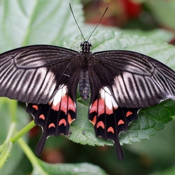 te bewonderen in Someren, vlindertuin Costa Rica