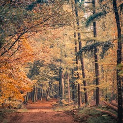 Herfst in Putten