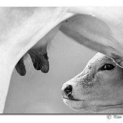 I love........milk!