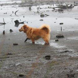 bagger hondje