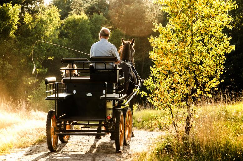 riding to the sunset - foto van een echtpaar die met paard en wagen aan het eind van de middag door de veluwe reden