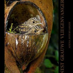 Grauwe vliegenvanger nestje